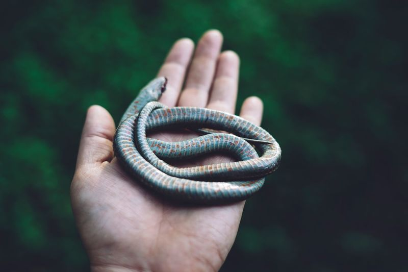 Garter snake Specimen Cool Green Nature Death Snake Human Hand Hand Human Body Part One Person Holding Focus On Foreground Body Part Outdoors Close-up