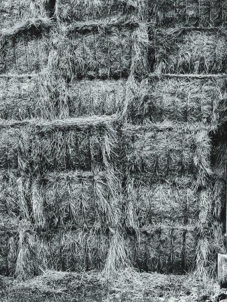 Paille Paille Textured  Abstract No People Farm Farm Life Bnwphotography Bnw_planet Bnwmood Bnwlovers Ferme Foin Grange Noiretblanc