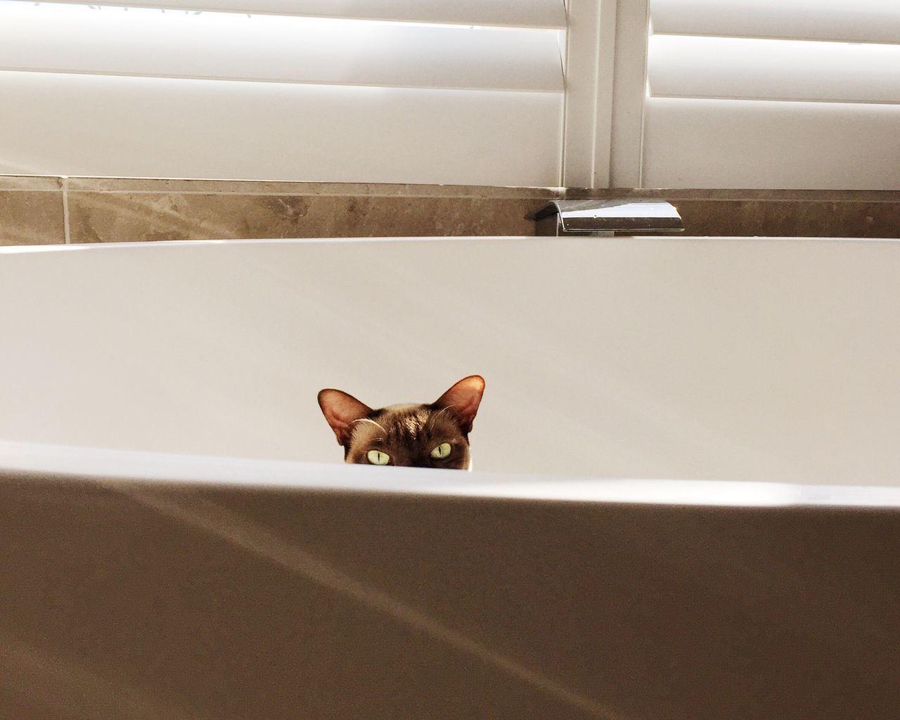 Portrait of cat in bathtub