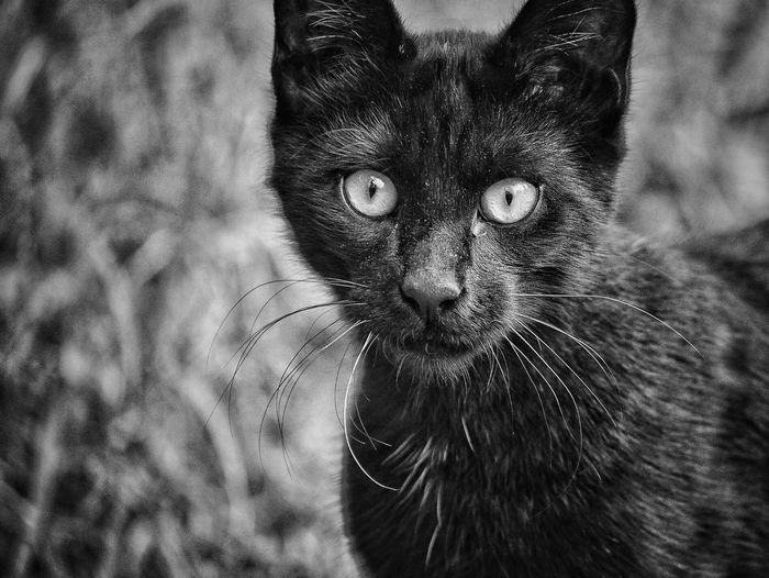 Black cat No