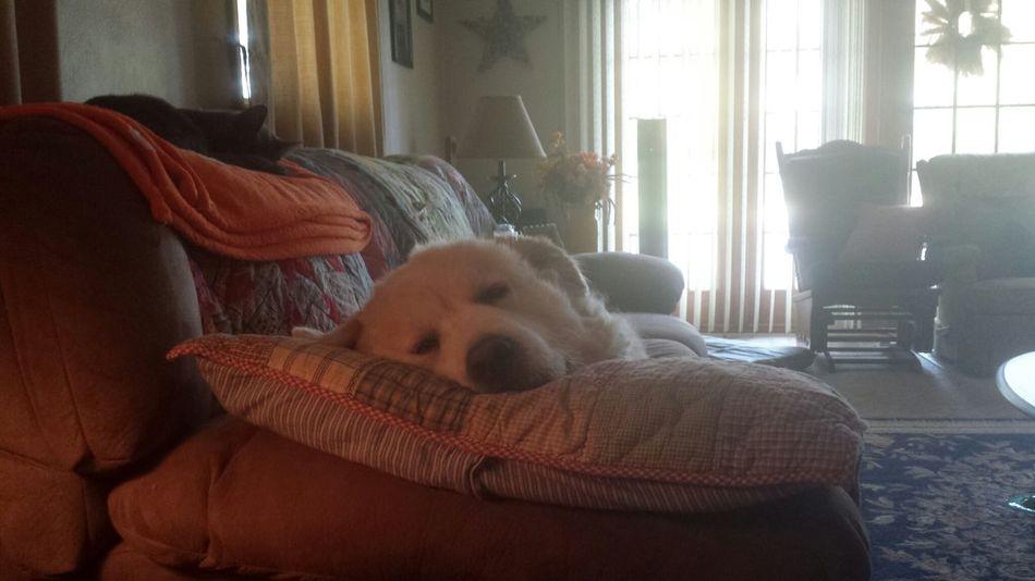 my boy sleeping
