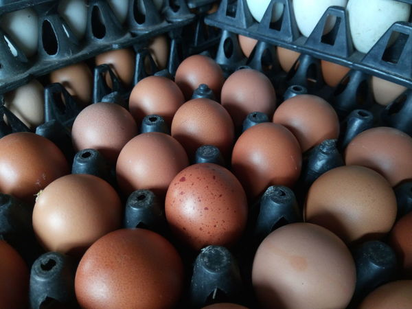 EyeEm Selects Large Group Of Objects Food Indoors  Food And Drink Full Frame Egg Carton Backgrounds Market Chicken Eggs Close-up No People Day