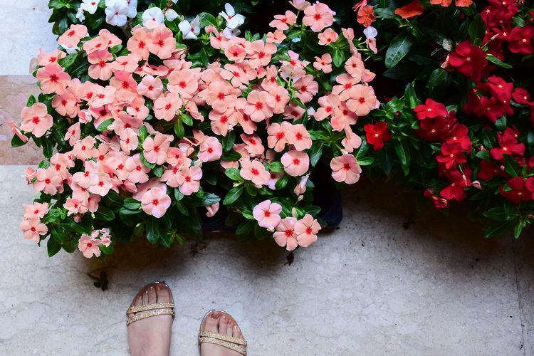 Mercatino dei fiori a Firenze EyeEm EyeEm Gallery Flowers,Plants & Garden Beauty In Nature Body Part Flower Flower Head Flowering Plant Flowerporn Flowers Italy Mercatino Onthetable Petal Piedi Plant Shoe