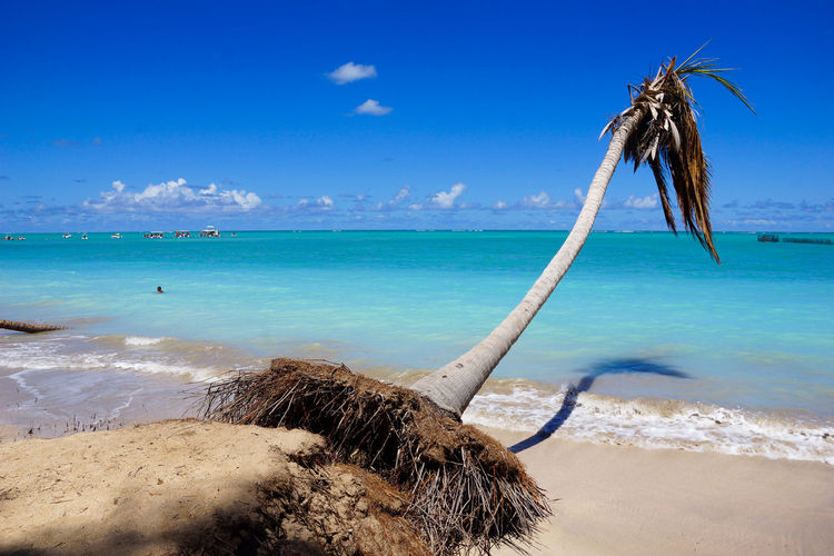 The coast in Aagoas, Maceio - Brazil Sea Water Beach Land Sky Horizon Scenics - Nature Horizon Over Water Beauty In Nature Nature Tranquility Tranquil Scene Sand Day Cloud - Sky No People Blue Outdoors Idyllic Turquoise Colored Coconut Palm Tree Driftwood Alagoas Maceió Brazil