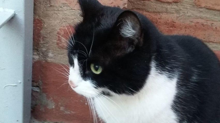 cats. gatos cat. Cat Cat Eyes Cat Lovers Cat Photography Cat Watching Cats Cats Of EyeEm Cats 🐱 Catsofinstagram Cat♡ Gato Gato Blanco Y Negro :3 Gato Negro Gatos Gatos 😍