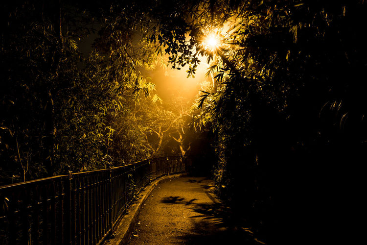 Lonesome road Beauty In Nature Growth Illuminated Lonely Nature Night No People Outdoors Road Scenics Sky The Way Forward Tranquil Scene Tranquility Tree
