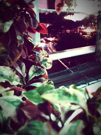 Flower Streetphotography City Nightshot Night Tree