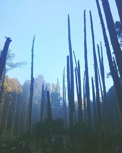 南投,忘憂森林。 Forest 忘憂森林 Trees Nature Taiwan