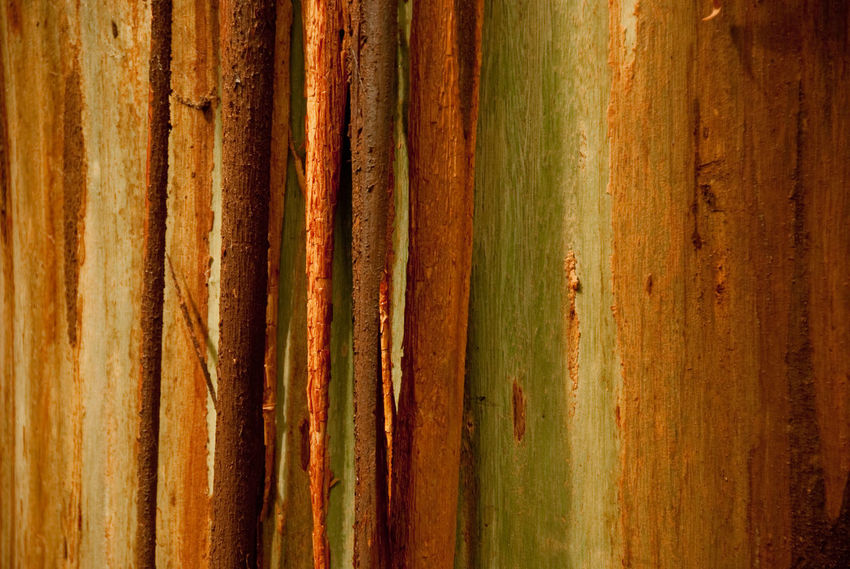 Tree bark alongside the Otway Treetop Walk near Colac, Australia. Bark Bark Texture Brown Close-up Day Detail Forest Forest Photography Forestwalk Green Green Color Natural Pattern Nature No People Orange Color Otway Sun Textured  Tree Tree Trunk Trunk Wood - Material Colour Of Life