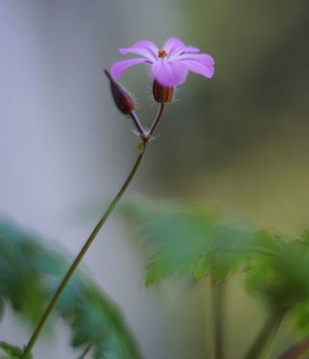 Flower Flower Head Pink Color Water Close-up Plant Stem In Bloom Stalk Pink Blossom Pistil Stamen Blooming Petal Plant Life Botany