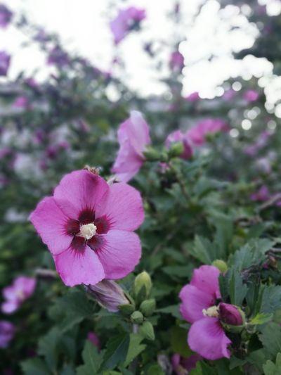 Flower Flowers Nature Purple Petal Flower Head Outdoors Plant Beauty In Nature Cañuelas