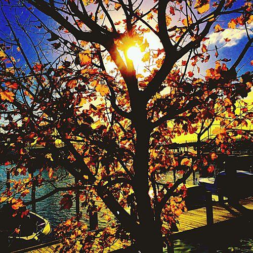 Tree Sunlight Nature