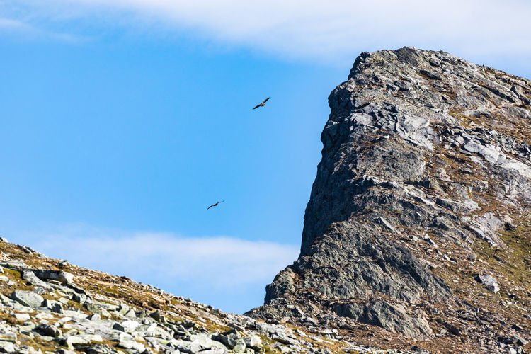 Hiking Northern Norway Norway Per Karlsatind Raptor Animal Themes Animal Wildlife Animals In The Wild Beauty In Nature Bird Bird Of Prey Flying Low Angle View Mountain Nature No People Nordland County Outdoors Rock - Object Scenics Sea Eagle Sky Spread Wings Summit White Tailed Eagle