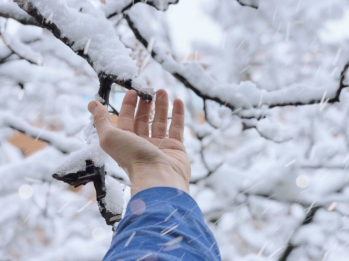 Cropped Hand Of Man Touching Branch During Snowfall