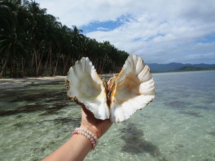 Cropped Hand Of Woman Holding Seashell Over Sea