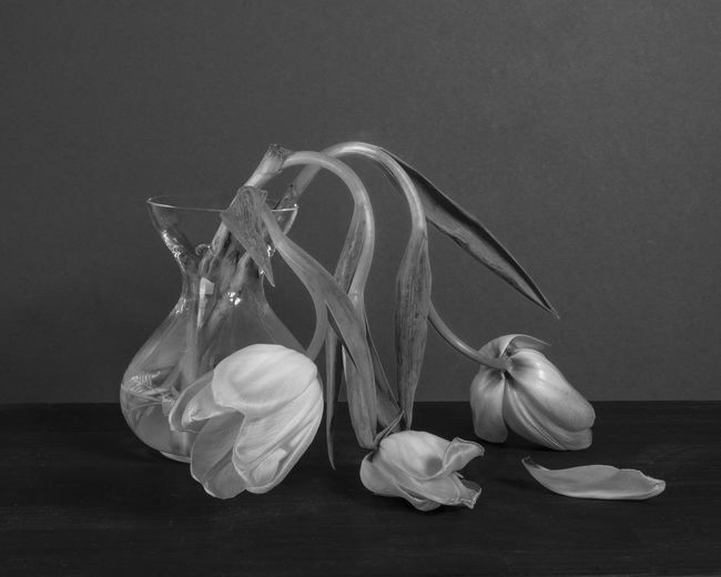 Close-up of garlic on table against gray background