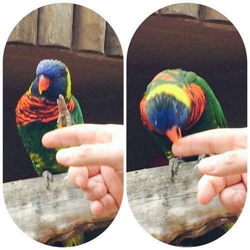 Меня укусил попугай :) И этот момент даже удалось заснять!