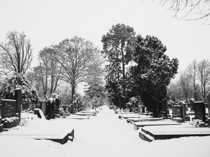 Cemetery Cemetery Photography Blackandwhite Bnw_collection Streetphotography Nature_collection Snowy Trees Vienna Wien vanishing point Snow Winter Cold Temperature Tree Winter Sport Outdoors Nature Day No People