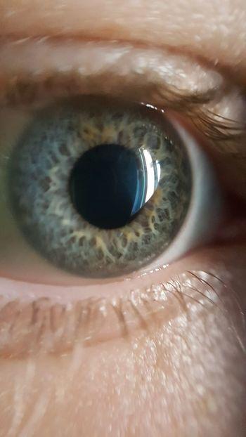 Human Eye Eyesight Eyelash Human Body Part Iris - Eye Eyeball Sensory Perception