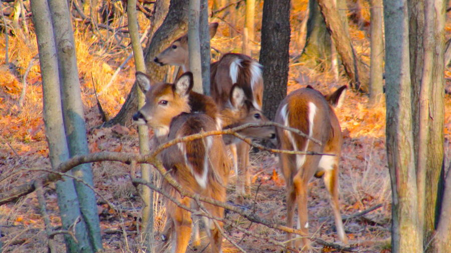 4 Deer All Alone In The Woods Animal Themes Animals In The Wild Beauty In Nature Change Day Family Of Deers Mammal Nature No People Outdoors The Deer Family The Deer House Tree Young Animal