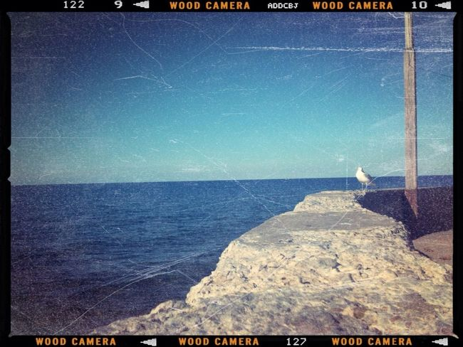 Seagull--edited with the Wood Camera app for iPhone!
