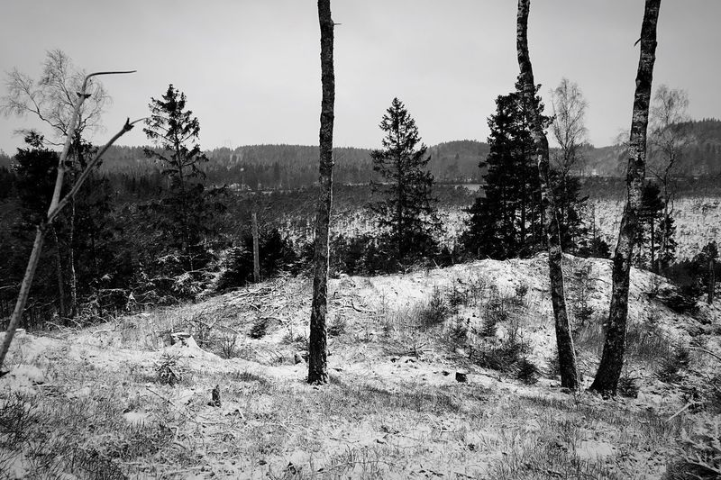 .::Winter17::. Tree Nature Growth No People Landscape Day Non-urban Scene Tranquility Outdoors Scenics Sky Melancholic Landscapes Remote Black And White Intense Nothingness Black And White Excellence Nothingisordinary MADE IN SWEDEN Tree_collection  Nature Snow Covered Snow
