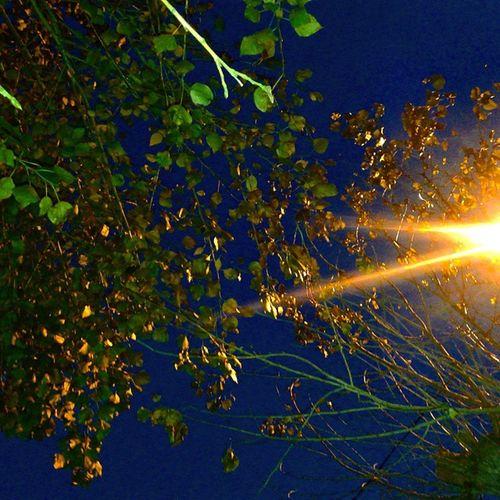 осень вечернеенебо прогулка Природа погодафонарь веткилистьянастроение