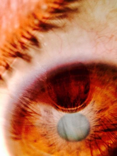 Human Eye Eyelash Eyesight Eyeball Sensory Perception Macro Iris - Eye Vision Reflection 21x Macro Olloclip EyeEm Ready