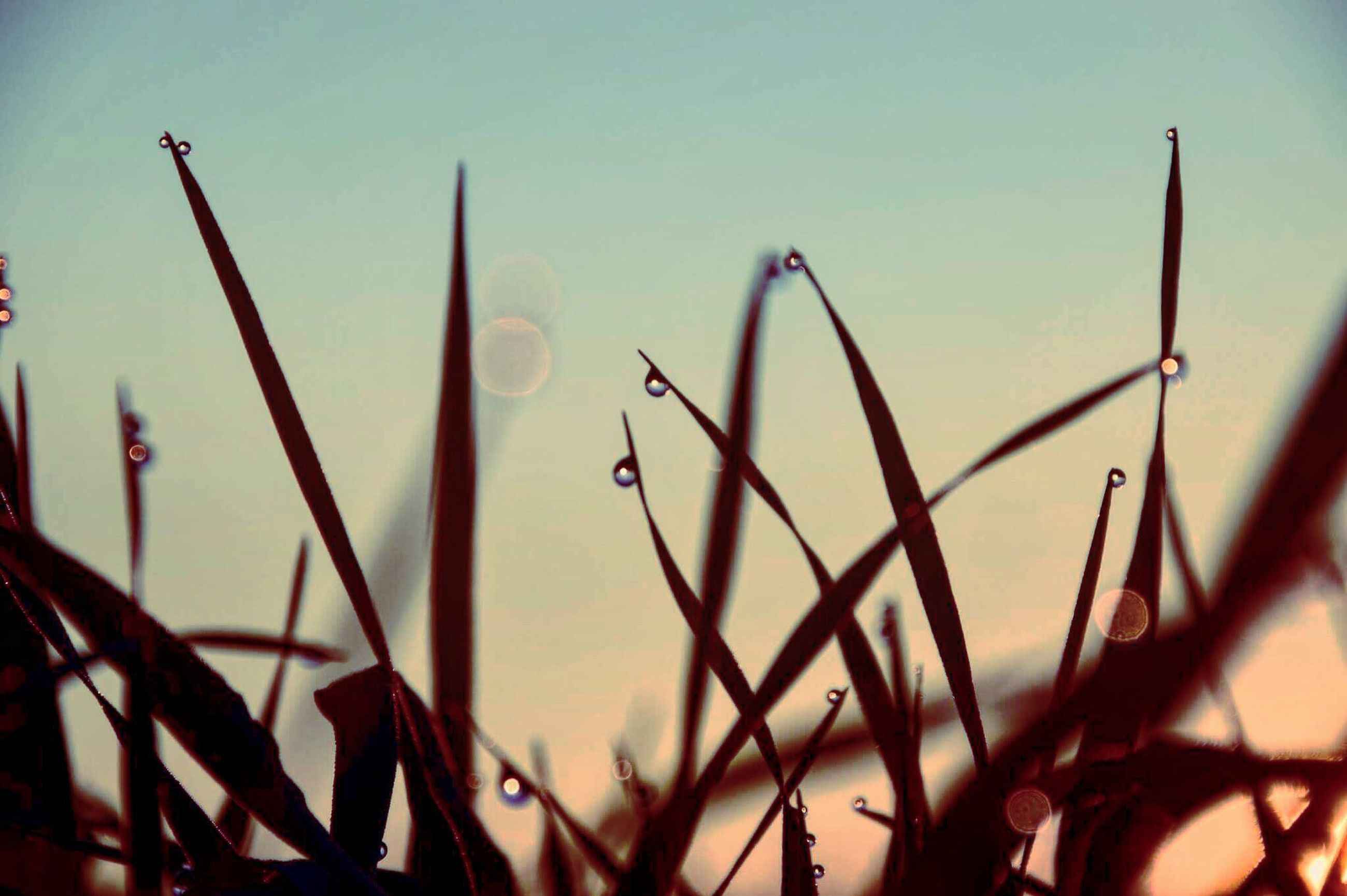 growth, nature, plant, close-up, no people, outdoors, tranquility, day, beauty in nature, sky