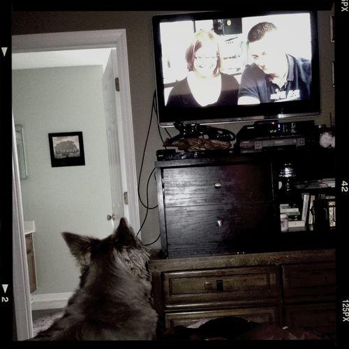 Sadie watching TV w me Dog Time