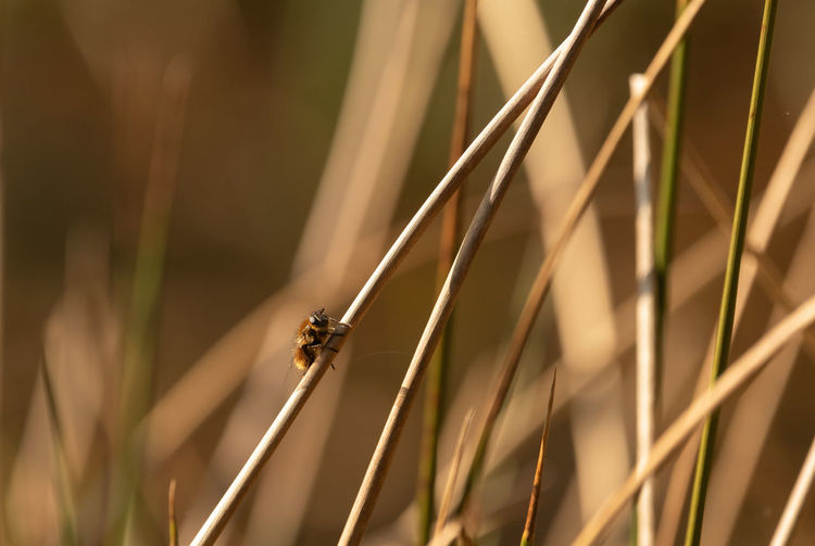 wild bee Wild Bee Animals In The Wild Animal Wildlife Animal Themes One Animal Insect Nature Day Focus On Foreground Grass Beauty In Nature Plant Sunlight Blade Of Grass Outdoors Animal