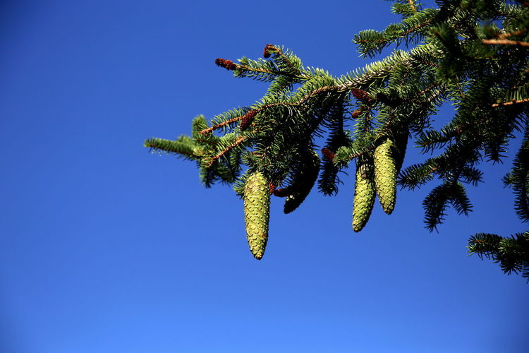 Low angle view of a tree against blue sky