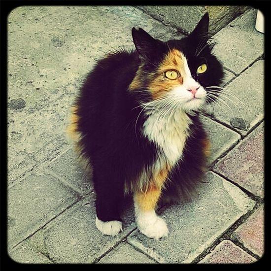 Feeling Thankful Beautiful Cat Catoftheday Naturally Beautiful ♥