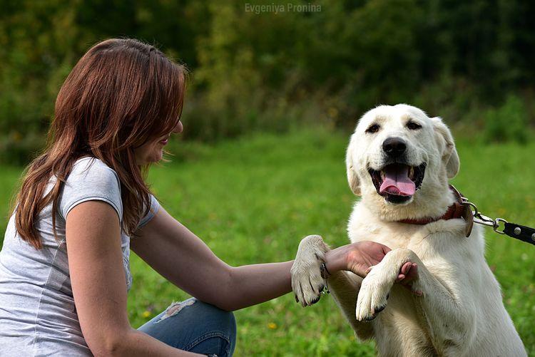Pets Domestic