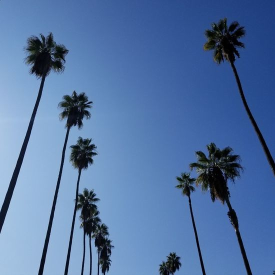 Palm Trees in