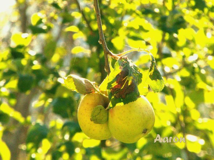 Manzanas Photoeyeem