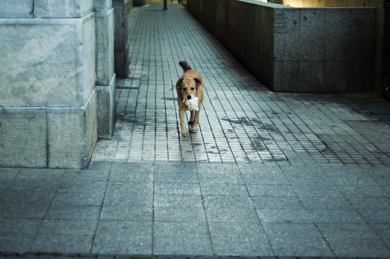 Portrait of dog on sidewalk