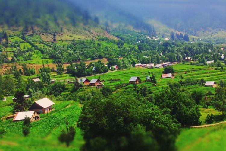 Kashmir Wangat Kashmir Kangan Kashmir Rural Scenes Rural Landscape Village Life Village View Village GREEN LIFE Trees