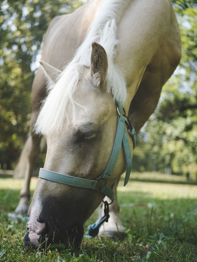 Beautiful Eating Horses Magical Nature Animal Animal Head  Animal Themes Animal Wildlife Bridle Day Domestic Domestic Animals Field Grass Herbivorous Horse Land Majestic Mammal Nature One Animal Outdoors Pets Plant