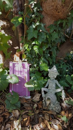 Fairy Garden Fairy Garden Garden Photography Fairys Nimphs Fairy Door Tree