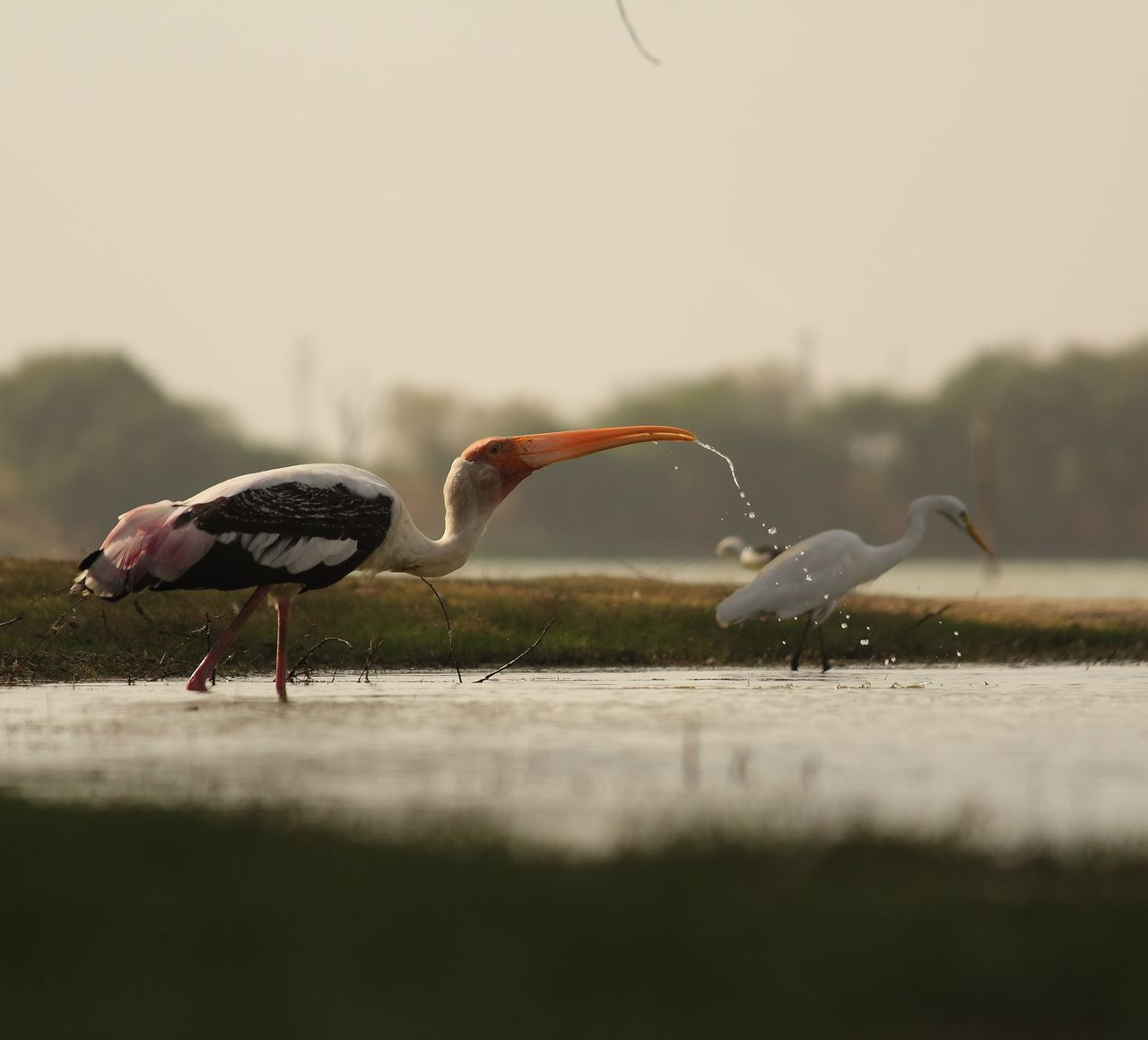 bird, animals in the wild, animal themes, animal wildlife, nature, no people, water, day, outdoors, beauty in nature, crane - bird, flamingo, sky