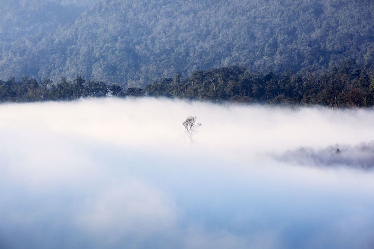 Lonely tree Cloud Lanscape Photography Lonely Tree Market Mountain Spring Flowers Travel Photography Vietnamphotography