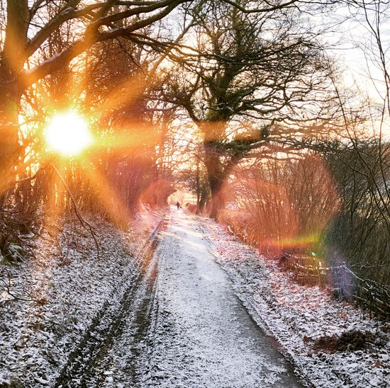 Bright winter morning Tree Plant Direction The Way Forward Nature Transportation Snow Winter Cold Temperature Beauty In Nature Sunlight Diminishing Perspective Road Scenics - Nature Tranquility Land Forest No People Day Lens Flare Outdoors Snowing