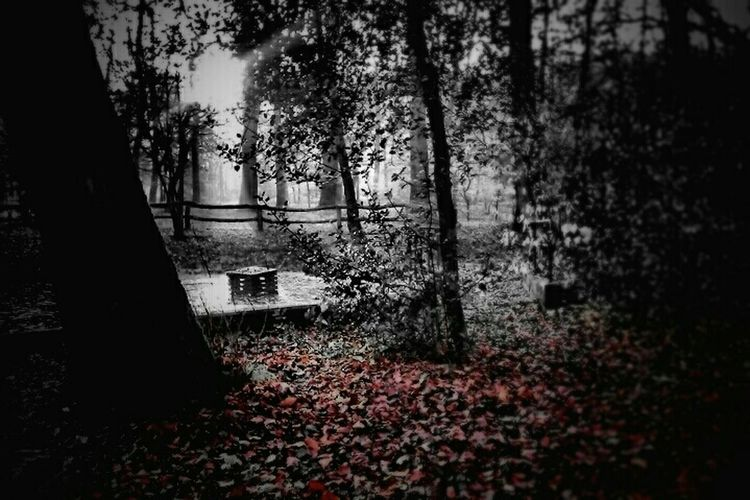 Light And Shadow Darkness And Light Monochrome Bw_collection Autumn Nature_collection Nature Naturelovers