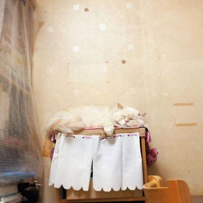 Like a Baby Cat Heema