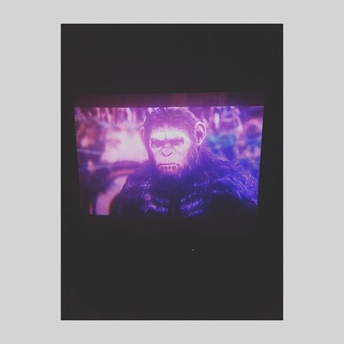 6 in the morning started watching this 📺📺💿💿...halloween Sigmahalloween Mua Makeup Todaysfaceis Dawnoftheplanetoftheapes Halloweenmakeup HalloweenCostumes Halloweenmakeupideas Halloweenparty Facepaint Planetoftheapes Caesar Ape Photobombed Photobomb Shutterflow Like4like Follow4follow 🔝🔝🔝🔝