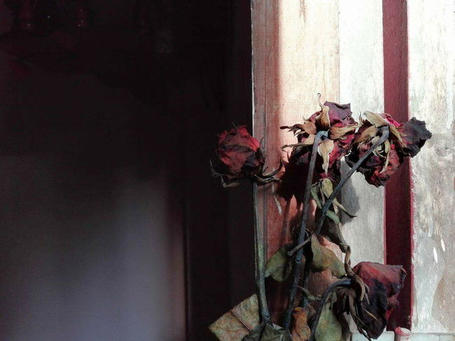 Flower Window Plant Nature Indoors  Sad Depress Rosé
