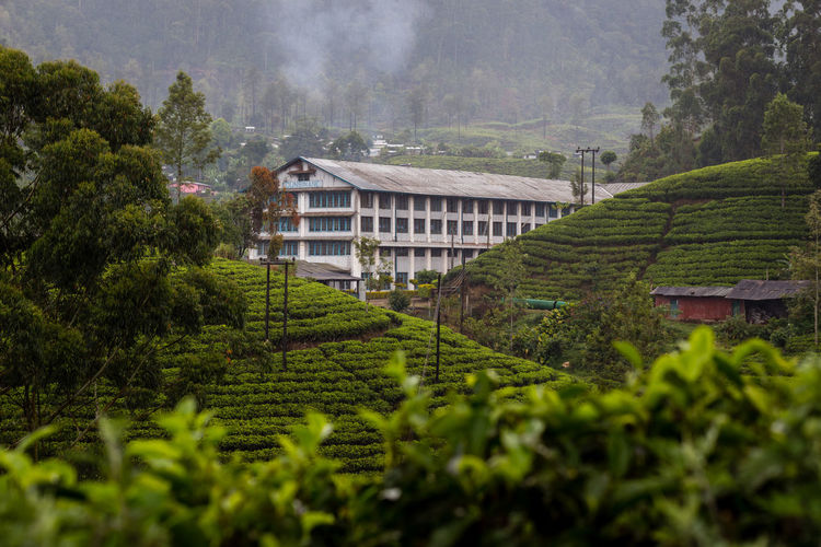 Tea Factory in surrounded by tea plantations, Sri Lanka Agricultural Land Agriculture Agriculture Architecture Building Exterior Built Structure Ella Factory Factory Building House Nature Nature Nuwaraeliya Outdoors Sri Lanka Tea Tea Plant Tea Plantation  Tea Time Terrace Terraced Field Tourism Travel Destinations Village