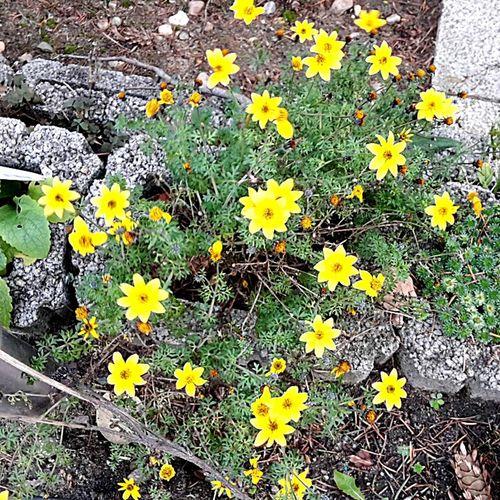 Blumen am 23.12.2015 im Garten, Wintertime