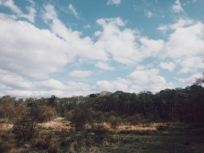 Portra Cloud -